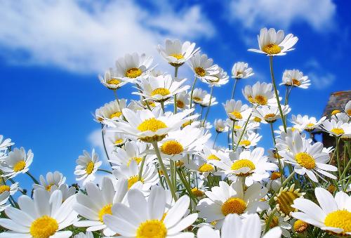 Astronomiczna wiosna