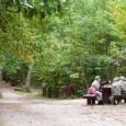 Las_Bielański_w_Warszawie_-_przykład_parku_leśnego,_główna_ścieżka