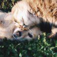 artykuły dla zwierząt pies i kot na łące